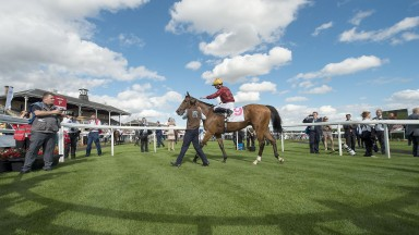 Simple Verse: will go for either the Fillies & Mares or Long Distance Cup