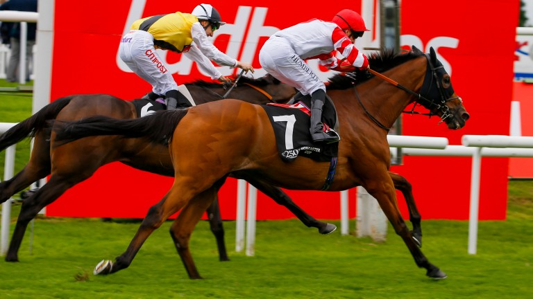 Sheikzayedroad (near side) denies Quest For More in the 2016 Doncaster Cup