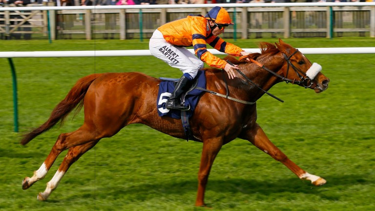 Teruntum Star: bids to repeat last year's success in the Coral Sprint