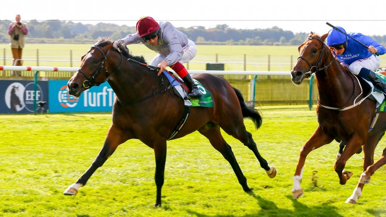 Shalaa: won the Middle Park Stakes in September 2015