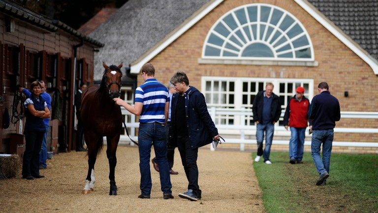Tattersalls: 213 breeze-up horses set to go under the hammer in May