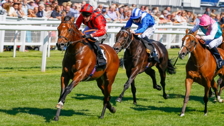 Ultimate Avenue (left): Ed Walker expects he will come on for his recent Kempton run