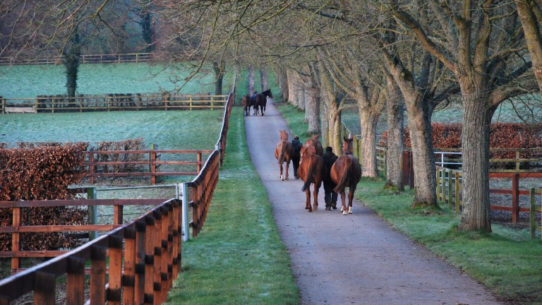 The British foal crop has grown by three per cent
