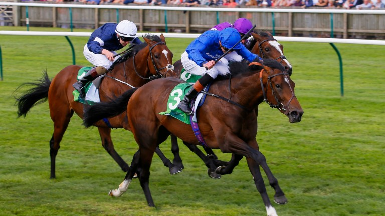 Best Of Days: can return to form at Windsor this evening