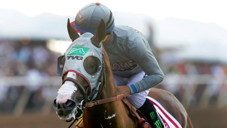 California Chrome: Lucky Pulpit's best son was twice crowned Horse of The Year