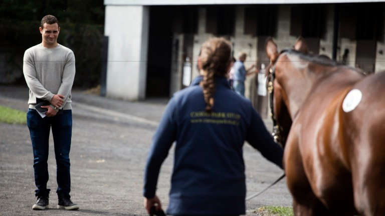 Justin Zayat: oversaw the sale of two seven-figure lots for Zayat Stables