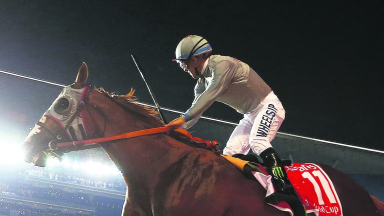 California Chrome: brilliant son of Lucky Pulpit won nearly $15 million in prize-money