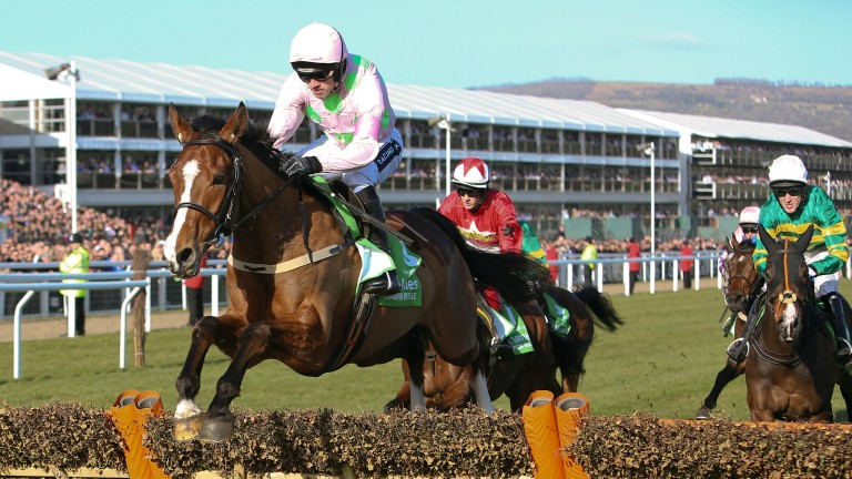 Faugheen: will not been seen at the Cheltenham Festival