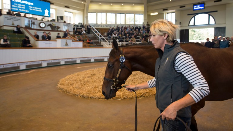 Normandie Stud's Dubawi colt out of Fallen For You makes 2.6 million guineas at Tattersalls last October
