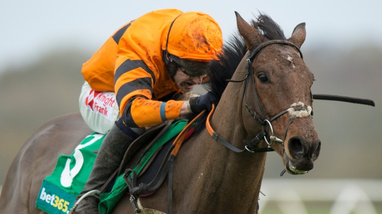 Thistlecrack: star hurdler is poised to begin his career over fences