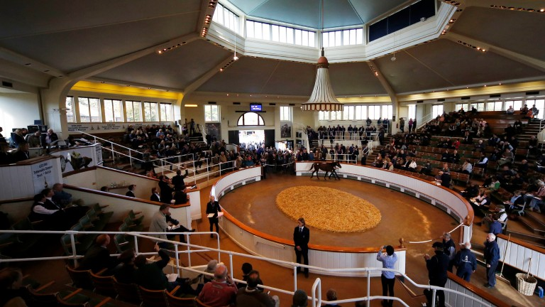 Tattersalls: February Sale begins a two-day run on February 2