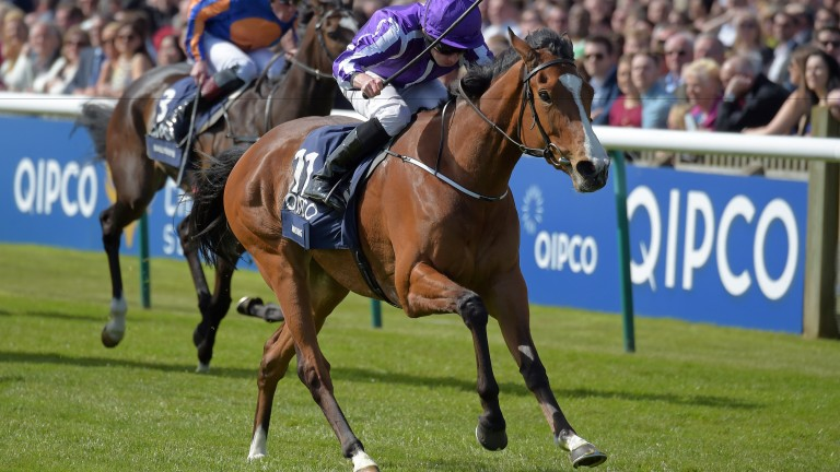 Minding: one of the most exciting horses in training