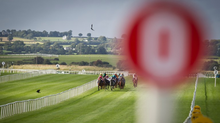Curragh: scene of a major gamble on Yourartisonfire