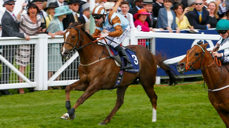 Caspian Prince: trainer Roger Fell has booked Declan McDonogh for the ride
