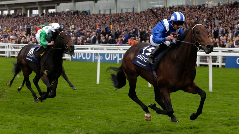 Muhaarar: his half-brother Wufud due to compete in the 7f novice stakes at Kempton (7.45)