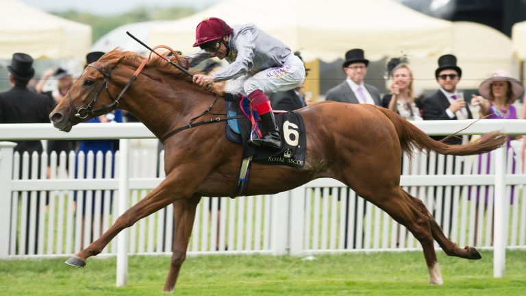 Galileo Gold: dual Group 1 hero on his way to victory in the St James's Palace Stakes