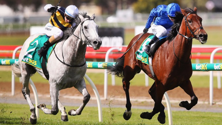 Qewy holds off Grey Lion