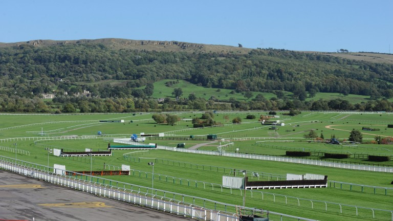 Cheltenham's second-last fence (left of picture) on the Old course will be moved eight metres closer to the final fence (right)