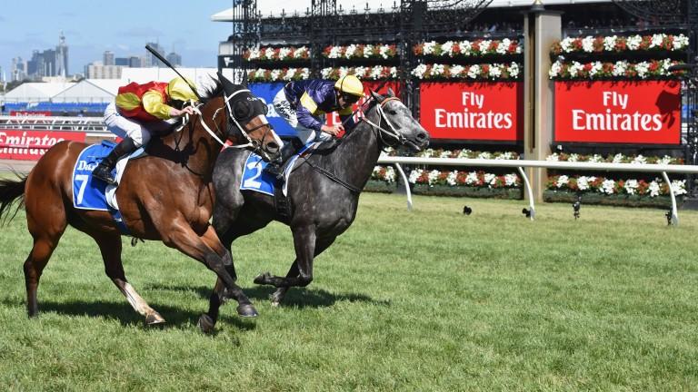 Chautauqua (far): notched a third successive T J Smith Stakes win