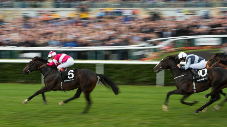 Rivet: continues a successful year for his sire Fastnet Rock