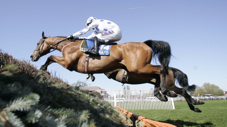 Bold and brilliant: spring-heeled Hello Bud made nearly every yard to win the Scottish Grand National under Paddy Brennan at Ayr in April 2009