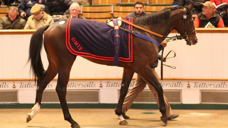 Lot 315: Sincil Bank will continue his career in Hong Kong after selling for 270,000gns