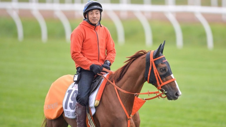 Takao Suda says the gelding can be inconsistent