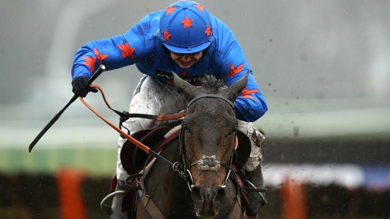 Frodon: Paul Nicholls' novice chaser is set to contest next month's BetVictor Gold Cup