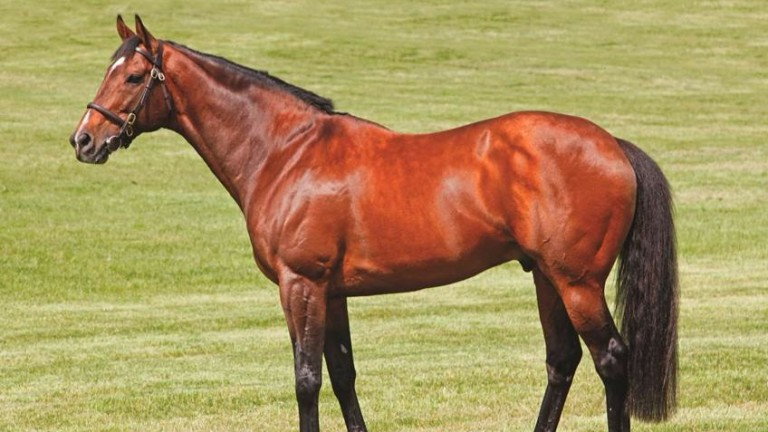 Mount Nelson: will stand as a dual-purpose sire at the Irish operation