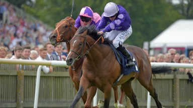 Pleaseletmewin: set to continue career in Qatar after sale