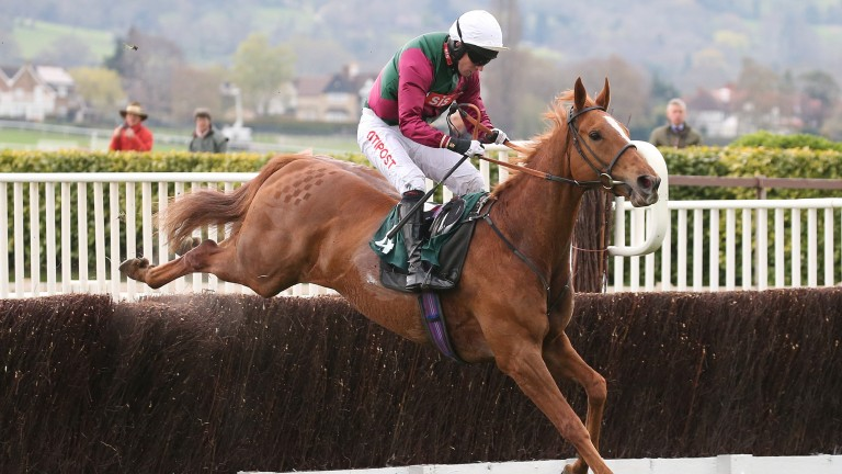 Indian Stream: posted arguably the best performance of those to run at Cheltenham