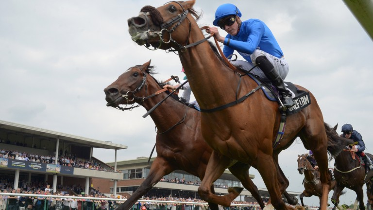 Home Of The Brave: 'I couldn't be happier with him, ' says trainer Hugo Palmer