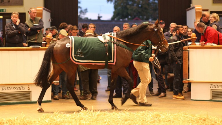 Harlem is led around the rings as he sells for 520,000gns at Tattersalls