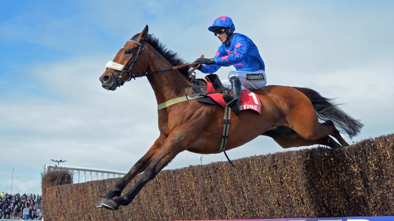 Cue Card: son of King's Theatre, the leading sire at the Cheltenham Festival in the last five years