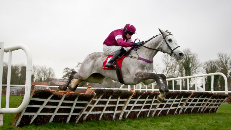 Dual Grade 1 heroine Petite Parisienne will be offered in foal to Shantou