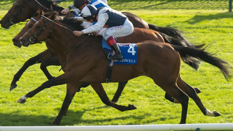 Crazy Horse: not his usual style of running