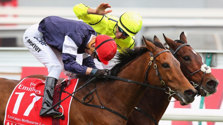 Almandin (near side): eased for a Melbourne Cup repeat after finishing fourth at Randwick