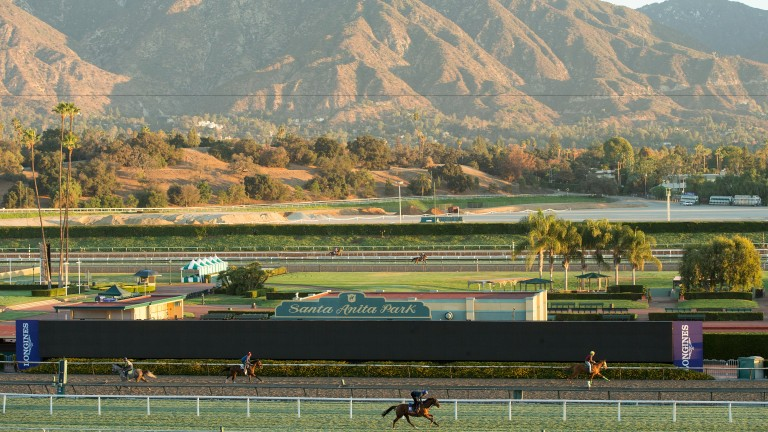 Home Of The Brave on the turf track overlooked by the San Gabriel mountains at Santa Anita, Arcadia, California 2.11.16 Pic: Edward Whitaker
