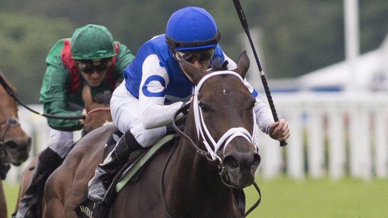 Tepin's success on European turf was among many recently registered by progeny of US stallions
