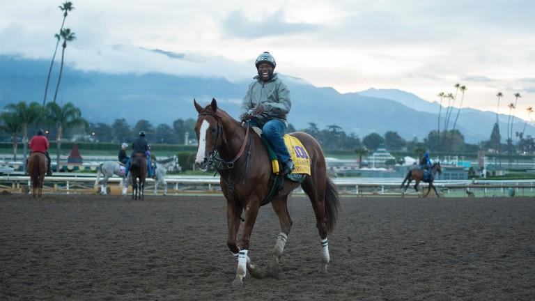 California Chrome (Dihigri Gladney) walks off the track at Santa Anita after a workout