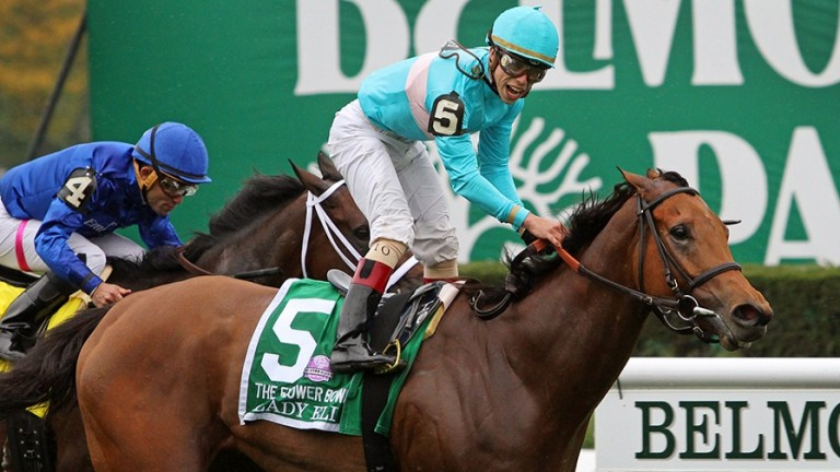 Lady Eli: made a miraculous recovery after stepping on a nail