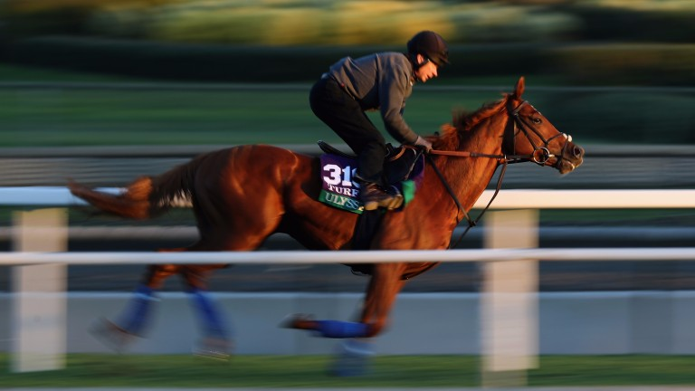 Ulysses goes through his paces for the Breeders' Cup Turf on the Santa Anita track