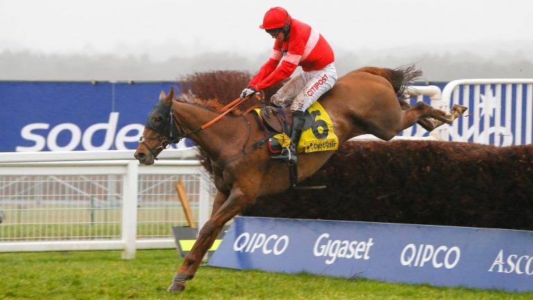 Silviniaco Conti: bids to give Paul Nicholls a fifth victory in the JNWine Chase at Down Royal