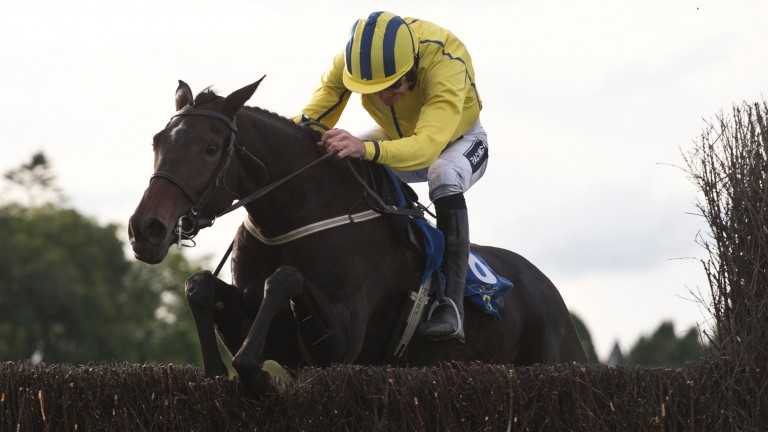 Westerner Lady: six-race winning streak started at Cork over hurdles in October 2015