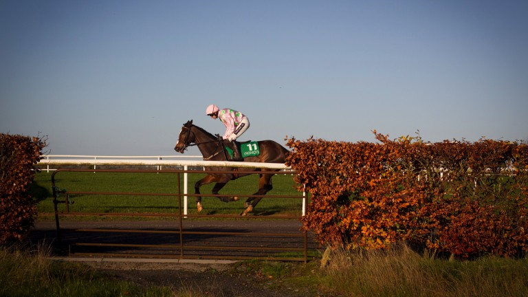 Vautour pictured here winning on his first start over fences in a beginners' chase at Navan