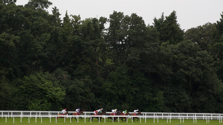 ASCOT, ENGLAND - JULY 08: Runners head away from the start of The Cushman & Wakefield EBF Breeders' Series Fillies' Handicap Stakes Race run at Ascot Racecourse on July 8, 2016 in Ascot, England. (Photo by Getty Images)