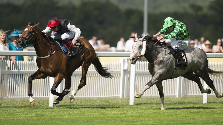 Free Eagle (left): Group 1-winning son of High Chaparral will stand his second northern hemisphere covering season at the Irish National Stud