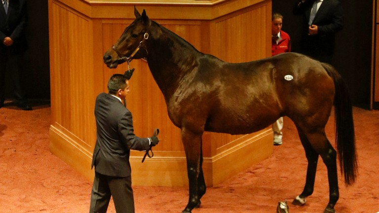 Baffled: bought by John Malone's Bridlewood Farm