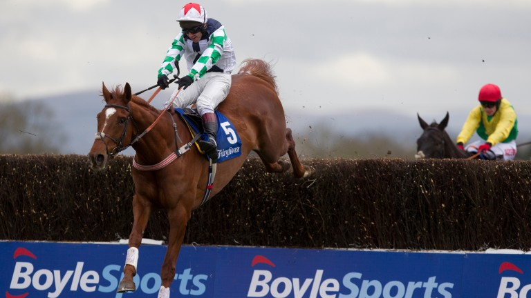 Top Gamble: has entries at Cheltenham and Navan