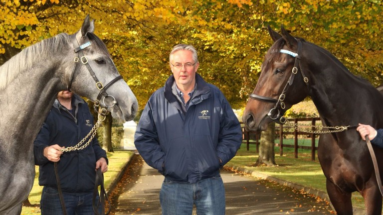 Derrinstown Stud manager Stephen Collins with Markaz (left) and Awtaad (right)